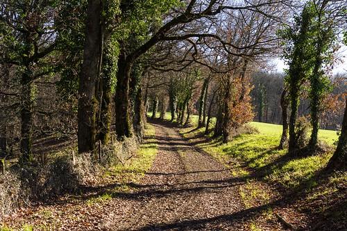 chemin en sous bois