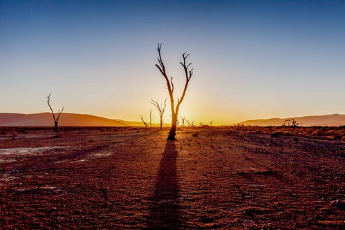 trees sun hot beauty dead shadows desert flat minimal sossusvlie