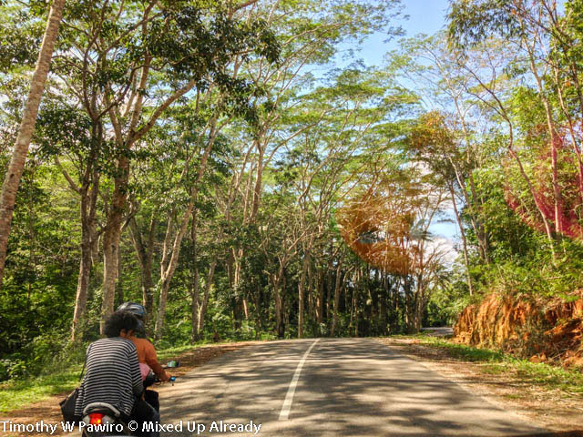 (07) Indonesia - Sumba - Lovely road