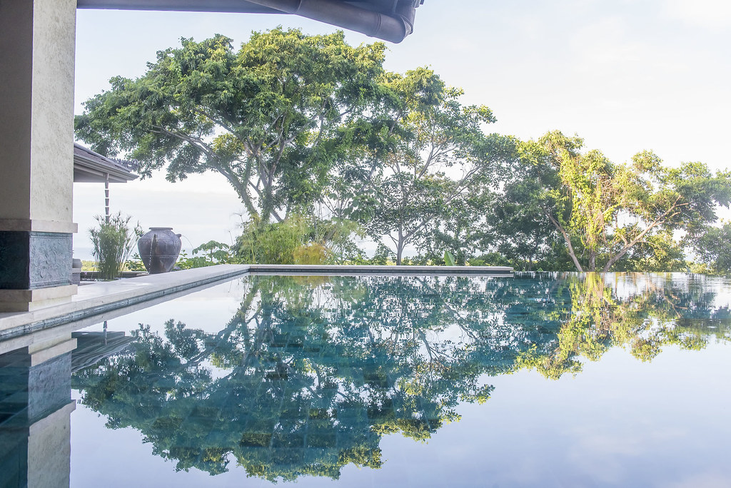 Jungle canopy reflected in pool