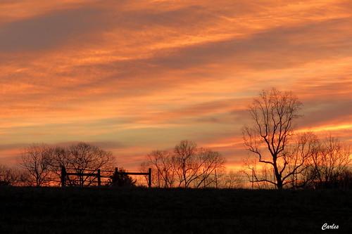 morning winter sunset orange sunrise outdoors evening northcarolina sillouette