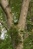 woodland-107.jpg