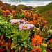 Garrapata Beach Bouquet by Rod Heywood