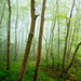 Spring woodland 3 by J C Mills Photography
