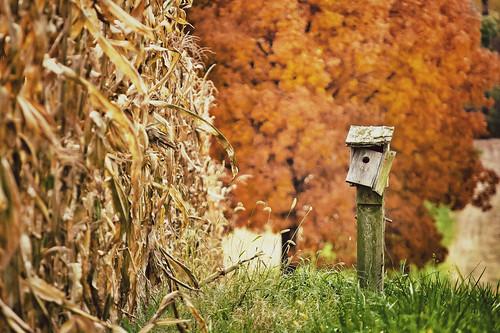 old tree nature photoshop landscape corn cornfield nikon birdhouse maryland nikkor cs5 d5100 snapseed