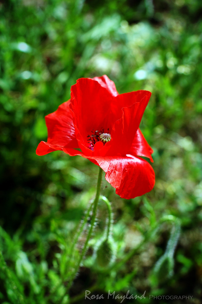 Flower 2 5 bis