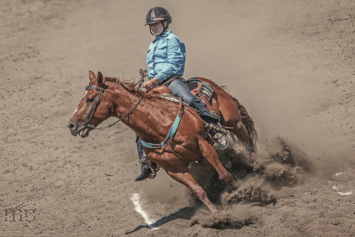 Gooseberry Lake : 4-H Rodeo 2013 : Stops On A Dime