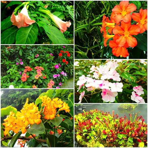 2013-Gardens-Flowers