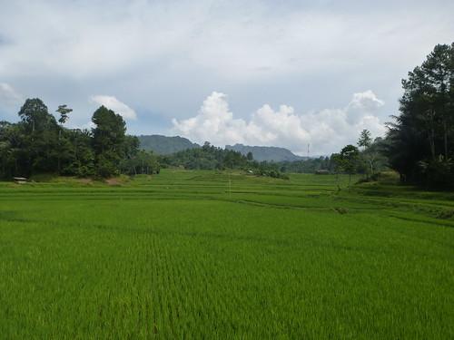 Sulawesi13-Makale-Rantepoao (9)