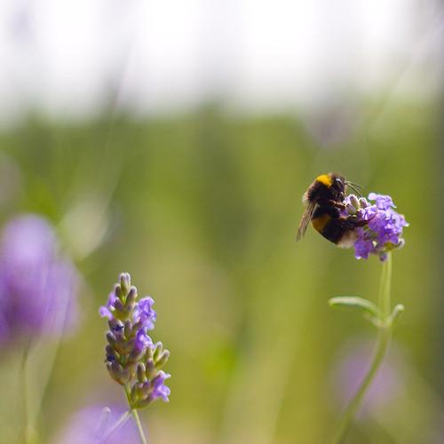 Balcony bee
