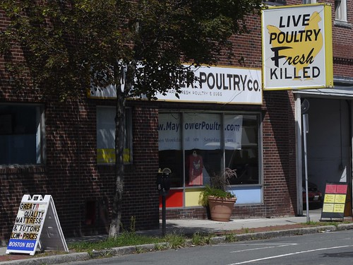 Live Poultry Fresh Killed