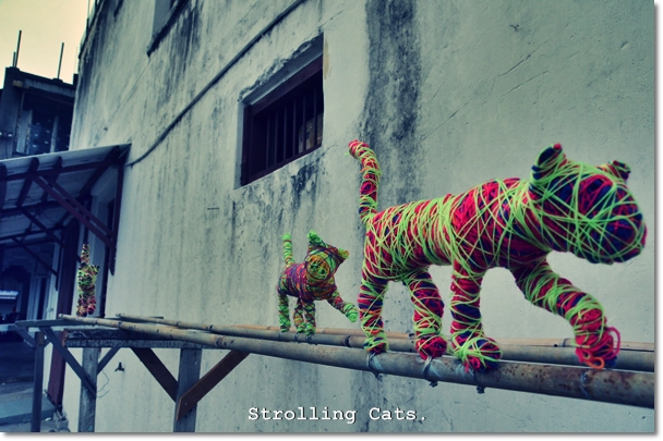 Strolling Cats