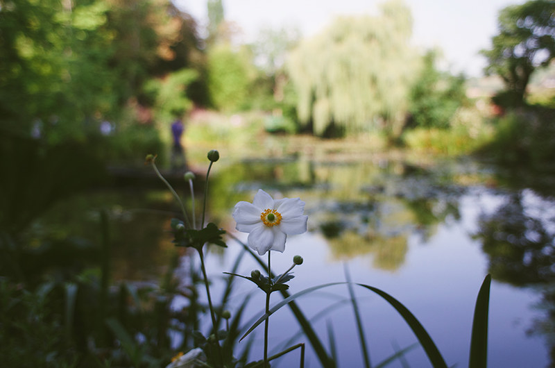 Monet's gardens / Giverny