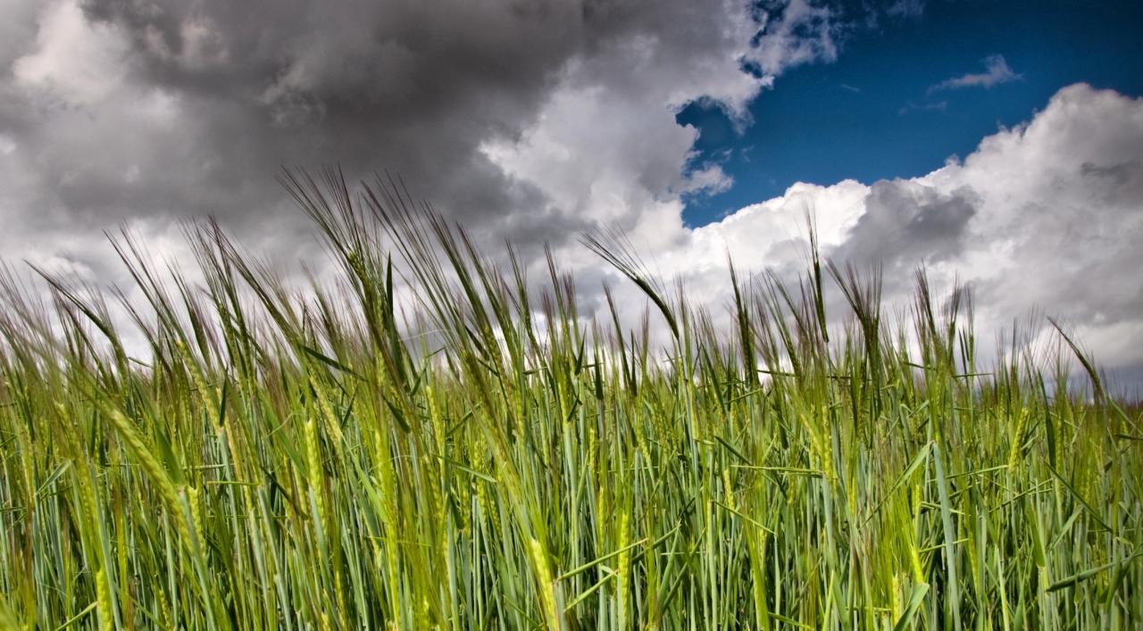 10. Cielo y trigales. El paisaje de La Mancha. Autor, Fusky