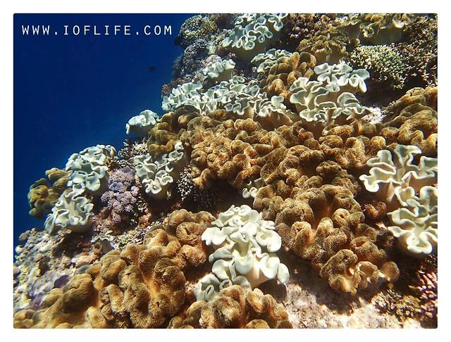 karang karang pulau kambing