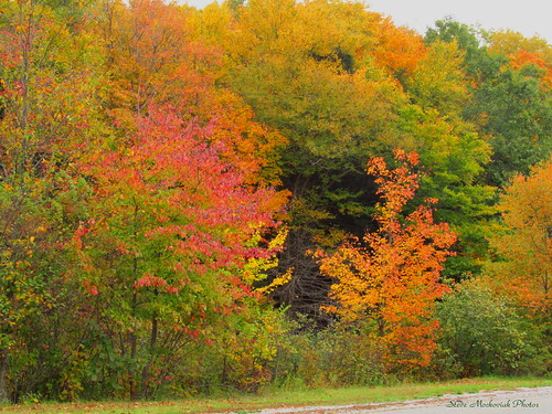 autumn trees fall leaves canon woods fallcolors powershot foliage sx150is smack53