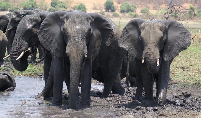 Zimbabwe - Imbabala  (835)