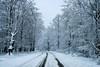Nieve esta mañana por Urbasa