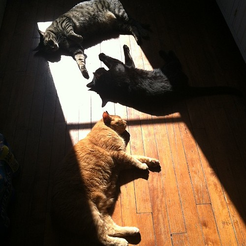 Ha! Sun kitties!