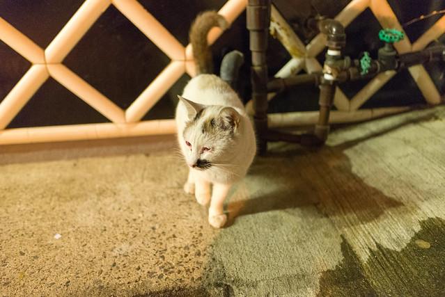 鉄輪温泉 ネコ