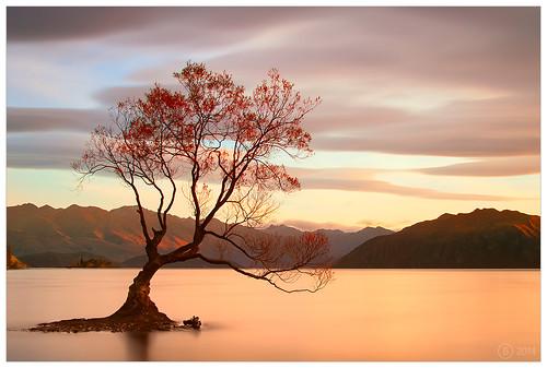 newzealand lake mountains sunrise le southisland wanaka d700 olgabaldock