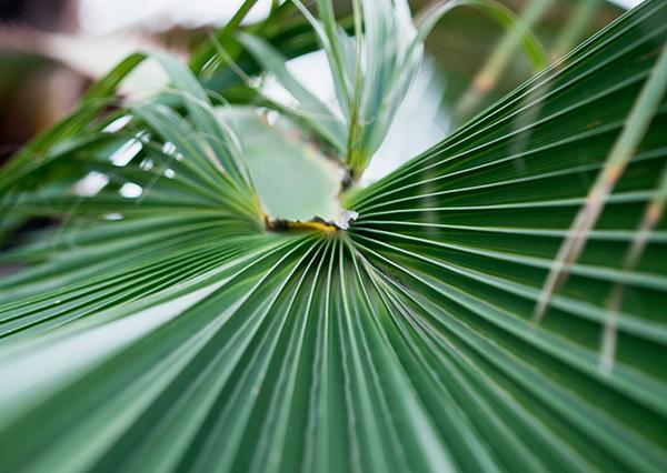 palm, palm leaf, דקל, כפות דקלים