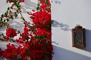 La buganvilla roja