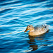 Ducking Peaceful by Michael Shum