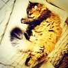 日子過太爽 #貓 #cat #kitty #pet #taiwan #afternoon