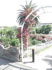 バラ[青和ばら公園(足立区青井)]