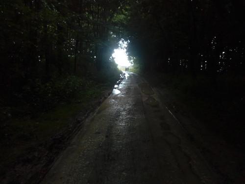 Through the woods darkly