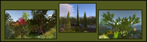 Botanical Trees - Sugar Maples, Linden Trees, Mediterranean Cypress