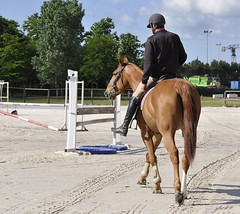 animal sports, equestrianism, english riding, eventing, dressage, mare, stallion, show jumping, hunt seat, equestrian sport, sports, recreation, outdoor recreation, mammal, equitation, horse,