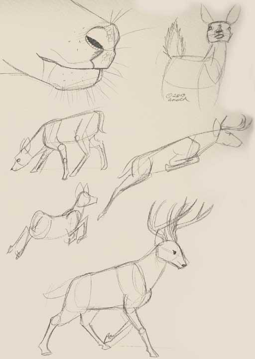 """The Secret Life of Deer"" Sketches"