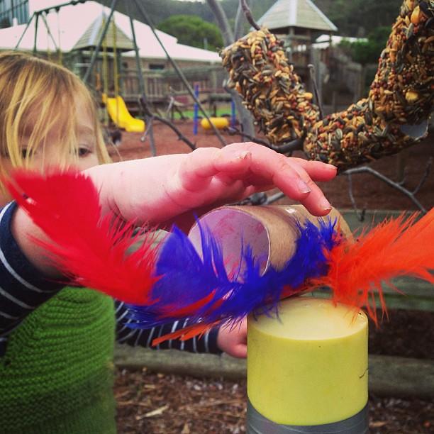 Birds and bird feeders at co-op today #hobartnaturallearners #coop