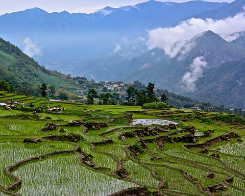 terraces of recently replanted rice in the foreground