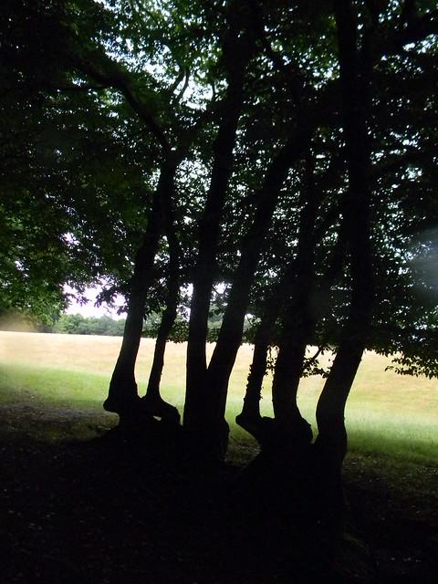 tree formation
