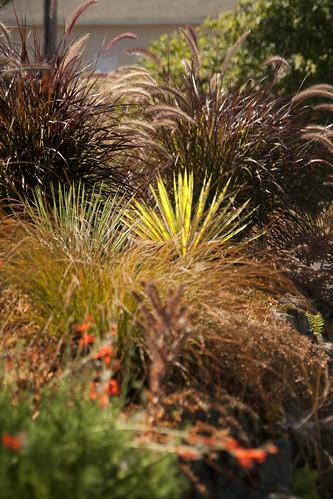 bob hyland Yucca