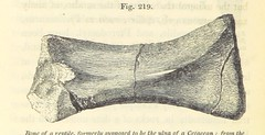 Image taken from page 412 of 'Elements of Geology'