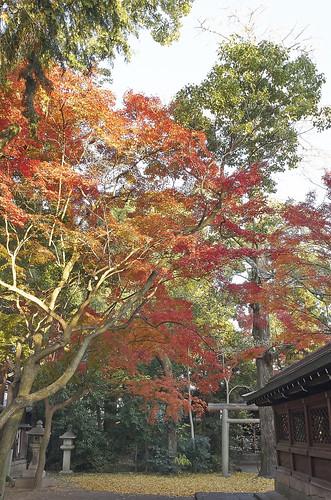 【写真】2013 紅葉 : 上御霊神社/2020-07-01/IMGP4172