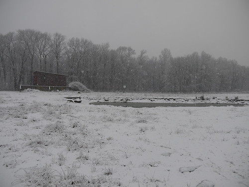 Snowy on the farm