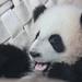 Mei Lun showing off her new teeth by smileybears