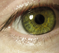 iris, vision care, yellow, macro photography, eyelash, green, close-up, eye, organ,
