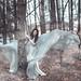 The Wind by rosiehardy