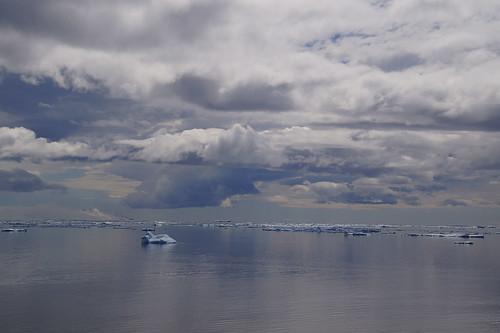 587 Weddell Sea met Adeliepinguin