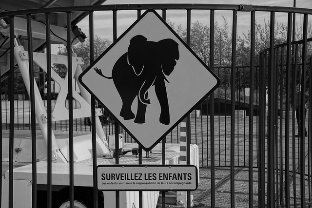 Attention éléphant