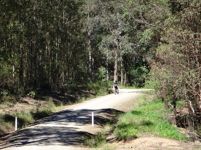 Kidaman Creek Forest