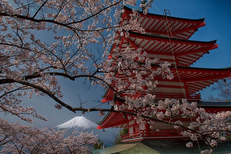 忠霊塔の桜2014