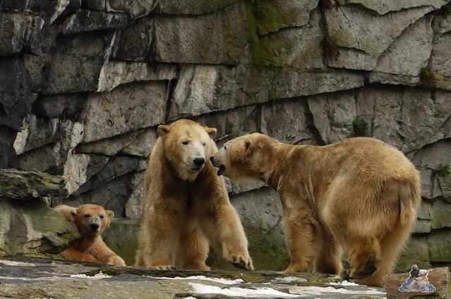 Tierpark Berlin 07.02.2015   228