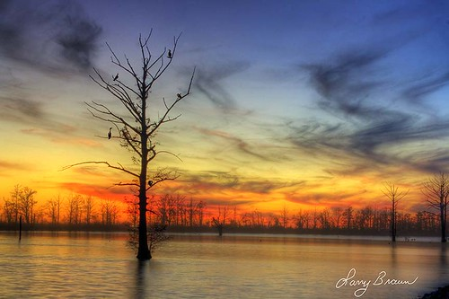 summer sky lake tree nature birds vertical landscape dusk missouri hdr widlife 2014 wonderlust missouriconservationareas